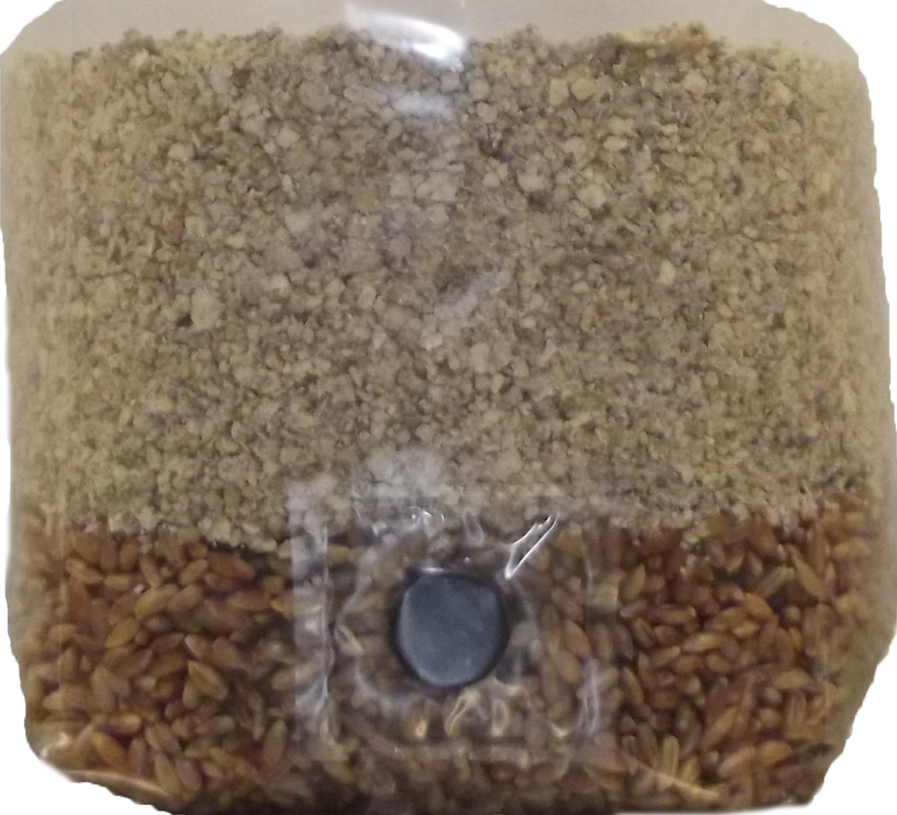 Brown Rice Flour Based All in One Mushroom Grow Bag