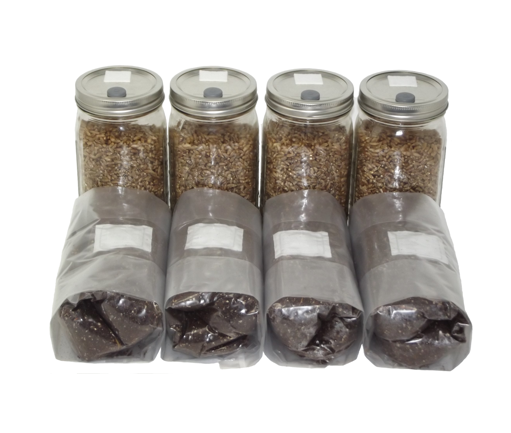 Quart Jars of Sterilized Rye and One Pound Bags of Substrate
